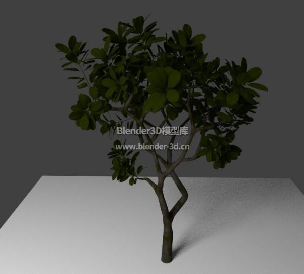 Cycles树