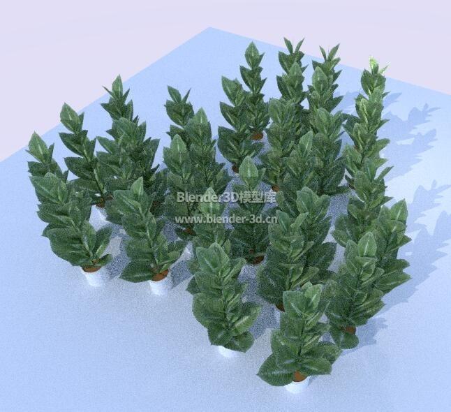 几何绿植盆栽