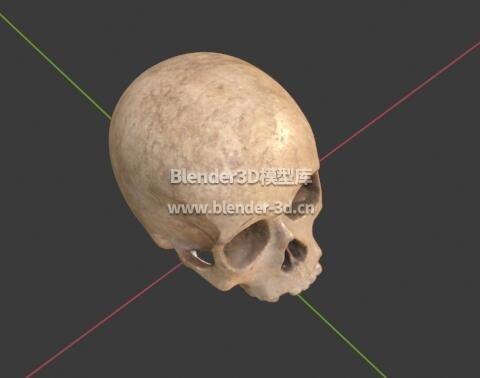 人类头骨骷髅