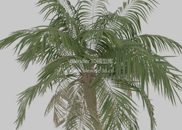 棕榈椰子树