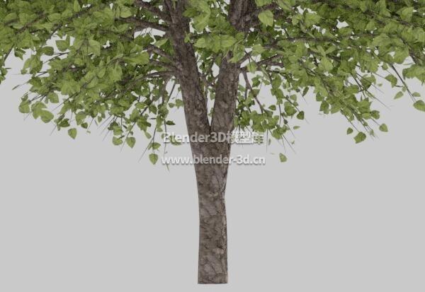 一棵绿叶树