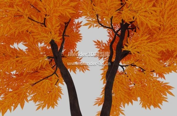 分叉红枫树