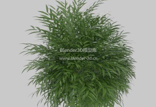 竹子盆栽盆景绿植