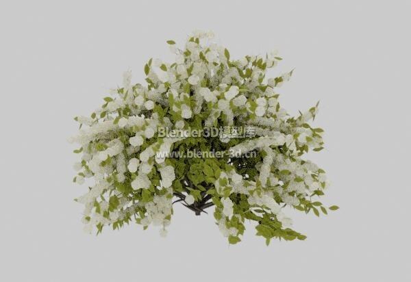铃兰花草植物